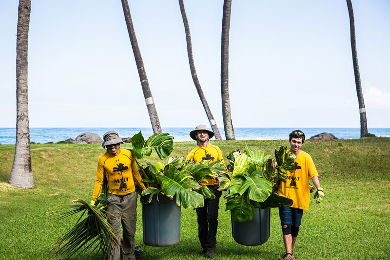 Maui Spikeless team members are carrying green waste to ensure an impeccable clean up of the Maui property.