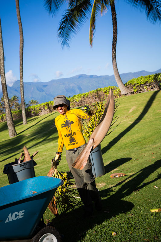 Maui Spikeless grounds crew carefully and happily cleaning up the palm fronds and coconuts from the pristine Maui property.
