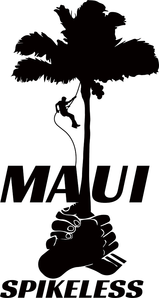 Maui Spikeless logo of a coconut palm and maui palm trimming climber in black color